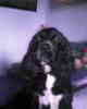 My Dog!!!