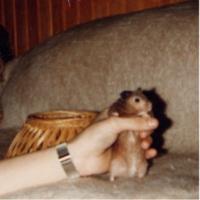 Tier der Woche vom 22.05.2006: Hamster Nils