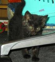 Tier der Woche vom 16.10.2006: Katze Terror-kid Charlie