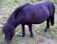 Tier der Woche vom 30.10.2006: Pony Hexi