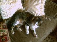 Tier der Woche vom 04.12.2006: Mietze Tammy