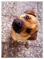 Tier der Woche vom 15.01.2007: Senfhund Rudi