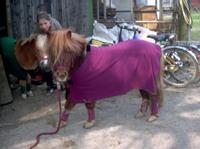 Tier der Woche vom 19.02.2007: Shetty Addy