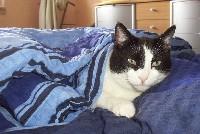 Tier der Woche vom 26.03.2007: Hauskatze Micky