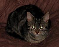 Tier der Woche vom 09.04.2007: Katze, Danny