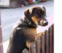 Tier der Woche vom 14.05.2007: Jagdhund-Mix Anton