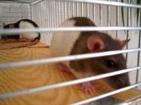 Tier der Woche vom 18.06.2007: vorn Diddle & hinten Charly hab sie noch nicht and