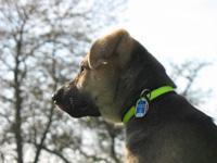 Tier der Woche vom 25.06.2007: Schäferhund Peezz