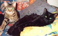 Tier der Woche vom 08.10.2007: Hauskatze (Balou hat ein bisschen Perser dabei) Ti