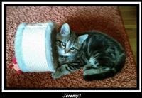Tier der Woche vom 05.11.2007: Kater Jeremy