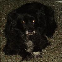 Tier der Woche vom 12.11.2007: Hund (Mischling) Moncho