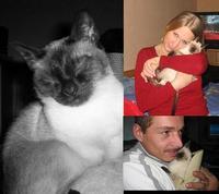 Tier der Woche vom 21.04.2008: Siamkatze Kimberly