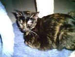 Tier der Woche vom 06.04.2009: Katze Saschi