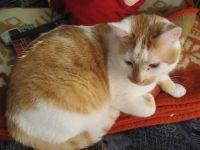 Tier der Woche vom 29.03.2010: Hauskatze Fiete