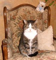 Tier der Woche vom 13.12.2010: Kater Lucky