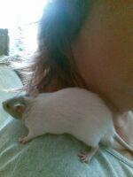 Tier der Woche vom 11.04.2011: Fellnase (Ratte) Cookie