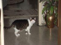 Tier der Woche vom 28.11.2011: Hauskatze charly
